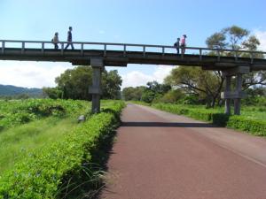 大井川 リバティからの蓬莱橋